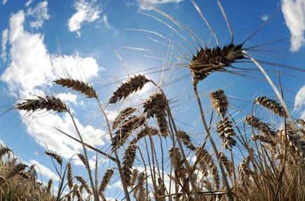 Climat: l'agriculture, cause, victime et solution du réchauffement | Toxique, soyons vigilant ! | Scoop.it