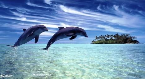 6 razones para poner un delfín en tu equipo de trabajo | Social Media Marketing | Scoop.it