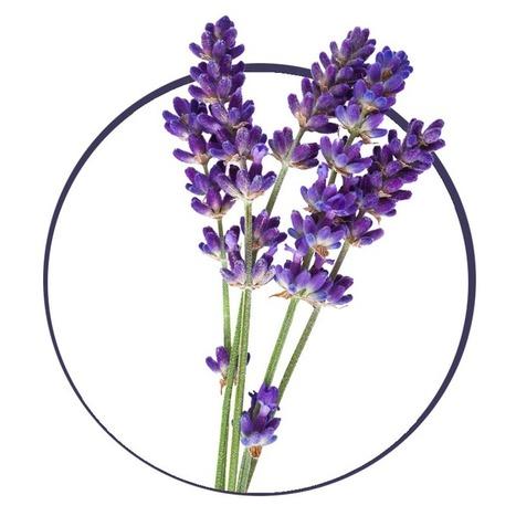 FREE WEBINAR: Reduce Allergies Naturally — Aromahead Institute: School of Essential Oil Studies | Wellness Life | Scoop.it