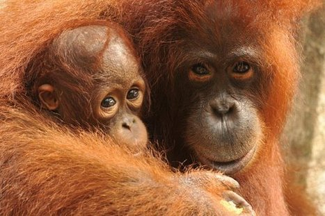 Real hope for the world's rainforests | conservation & antipoaching | Scoop.it
