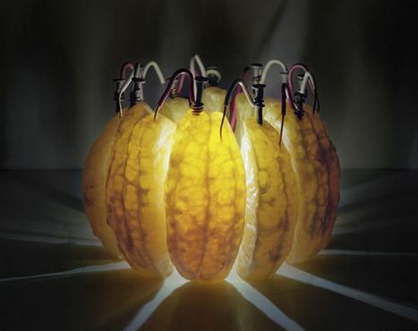 Back to Light: la frutta diventa Luce… | Giusy Barbato | Food & Beverage, Restaurant, News & Trends | Scoop.it