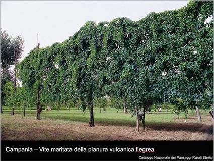 Landscape - Monitoraggio del paesaggio rurale italiano. Si comincia   landscape architecture & sustainability   Scoop.it