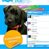 Free chat box