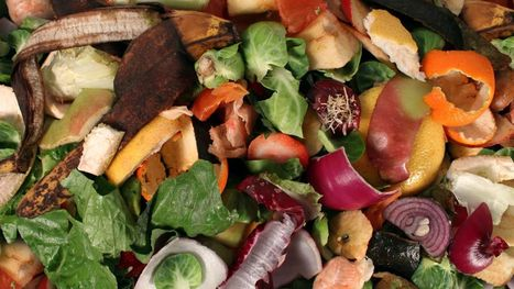 """An app that reduces food waste (""""a good idea that needs to be tested; will consumers bite?"""") 