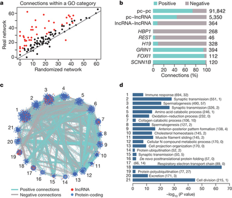 The evolution of lncRNA repertoires and expression patterns in tetrapods : Nature : Nature Publishing Group | Bioinformatics, Comparative Genomics and Molecular Evolution | Scoop.it