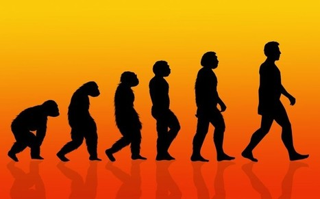 Evolution to blame for bad backs, dropped arches and impacted wisdom teeth, say scientists | BIOSCIENCE NEWS | Scoop.it