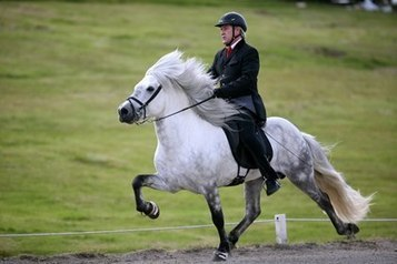 How Do Different Saddles Impact Horses' Movement? | Equine matters | Scoop.it