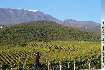 The fine red wines of Naoussa | Vins nature, Vin de plaisir | Scoop.it