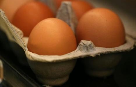 Alimentation: Monoprix ne commercialise plus d'oeufs en batterie | Sécurité sanitaire des aliments | Scoop.it