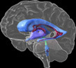 Genes to Cognition Online | Using Your Whole Brain | Scoop.it
