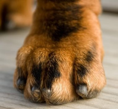 Grinding Dog Nails – You can master this. | MagCast Articles | Scoop.it