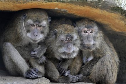 Texas research facility fined for deaths of primates | Vegan going mainstream | Scoop.it