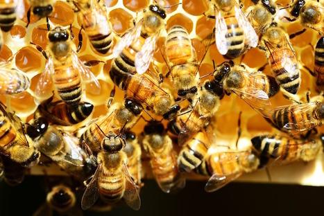 Le faux miel envahit les rayons des supermarchés | EntomoNews | Scoop.it