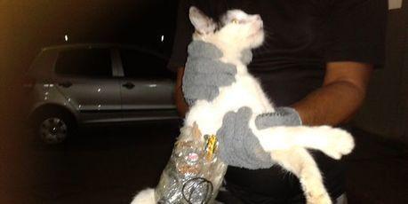 Un complice aux pattes de velours dans une prison brésilienne | Histoire de chats | Scoop.it