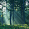 Resources to teach Forestry: patterns of human involvement and use of environments