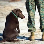 Reporting for duty: how companion pets help military veterans   Pedegru   Animals Make Life Better   Scoop.it