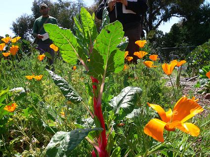 La permaculture, l'avenir de l'agriculture | Green et Vert | ECONOMIES LOCALES VIVANTES | Scoop.it