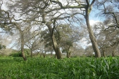Agroforestry offers Africa an 'evergreen' future - AlertNet | Food issues | Scoop.it