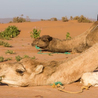 sahara desert tours Morocco