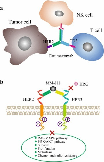 Development and clinical application of anti-HE