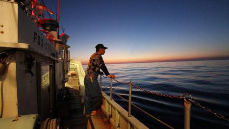 Fukushima sea monitoring for radioactive impact urged - World - CBC News   Chris' Regional Geography   Scoop.it