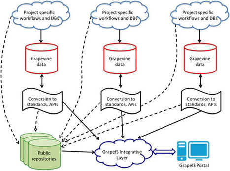 Towards an open grapevine information system | Plant Gene Seeker -PGS | Scoop.it