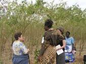 Malawi's bountiful harvests and healthier children - EurekAlert (press release) | Wheat World | Scoop.it