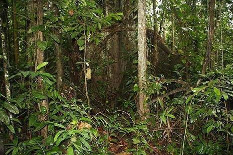 La forêt péruvienne est menacée par la recherche d'or - Amerique du sud | The Blog's Revue by OlivierSC | Scoop.it