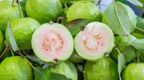 15 Amazing Guava Benefits: Heart Healthy, Weight Loss Friendly and More - NDTV   Your Food Your Health   Scoop.it