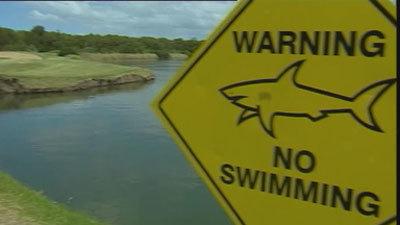 Brisbane's shark-infested golf course | Australian Culture | Scoop.it
