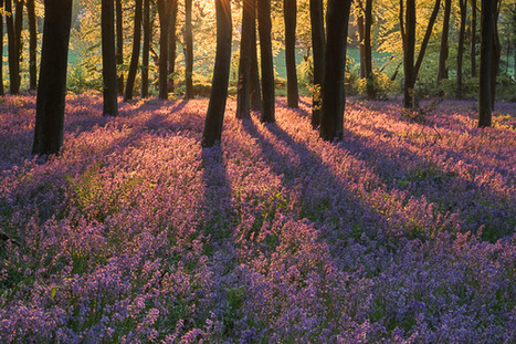 Should I sell my DSLR and buy a Fuji? | Doug Chinnery | Photography | Scoop.it