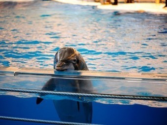 India bans captive dolphin shows, says dolphins should be seen as 'non-human persons' | All about water, the oceans, environmental issues | Scoop.it