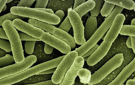 Microorganismos intestinales: moduladores del ánimo | Salud Publica | Scoop.it