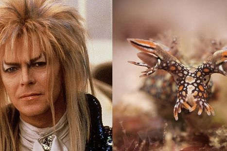 This blog comparing pictures of David Bowie and sea slugs makes total sense | The Dream Of A Shadow | Scoop.it