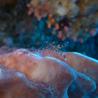 Underwater lightroom