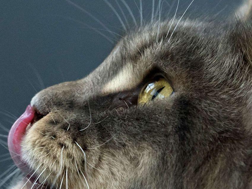 Toujours deux fois plus de chats que de chiens dans les foyers français