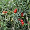 Gardening-o-rama