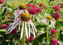 Preventing insect infestations - News & Observer | Plant Pests - Global Travellers | Scoop.it