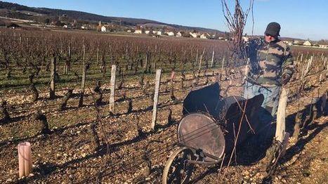 Grand froid : en Côte-d'Or, les vignerons se frottent les mains | Attitude BIO | Scoop.it