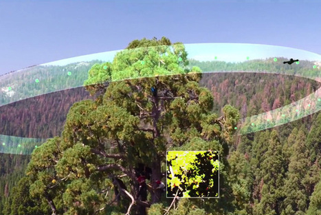 Drones help monitor health of giant sequoias | Erba Volant - Applied Plant Science | Scoop.it