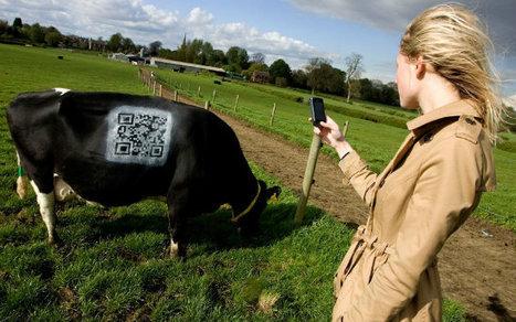 des vaches QRcodes en Grande Bretagne   Agriculture et réseaux sociaux   Scoop.it