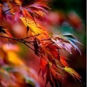 How to Photograph Autumn Colour | Photography tips and tools | Scoop.it