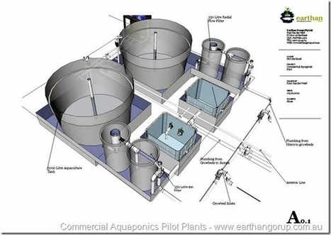 Free Commercial Aquaponics Pilot Construction P