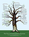 The Tree of Contemplative Practices | Mindfulness and Technology in Higher Education | Scoop.it