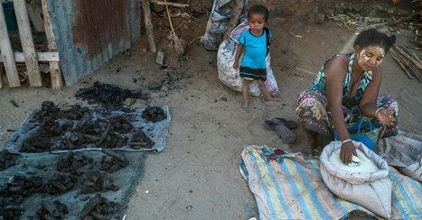 Africa's Charcoal Economy Is Cooking. The Trees Are Paying. | Geography Education | Scoop.it
