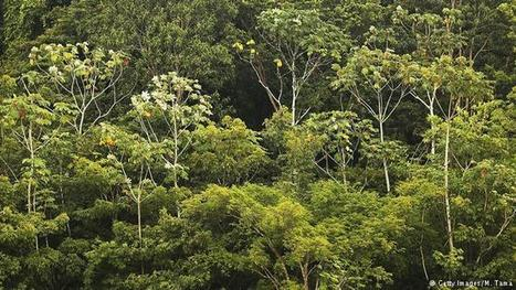 $400 million for rain forests | DW Environment | DW.COM | 20.01.2017 | Farming, Forests, Water, Fishing and Environment | Scoop.it