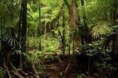 Amazonie : cartographier le stockage du carbone après l'exploitation forestière - CIRAD | Ecosystèmes Tropicaux | Scoop.it