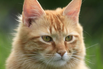 Elderly Cat Health Problems | Cats Rule the World | Scoop.it