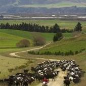 Conservation down from the hills | Otago, South Island, New Zealand | Nature + Economics | Scoop.it