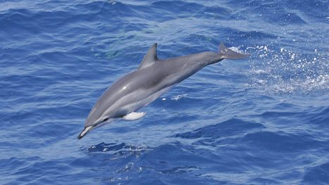 Hybrid Dolphin Gives Scientists Rare Window into Evolution — NOVA Next | PBS | Life on Earth | Scoop.it